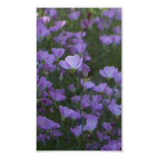 wildflowers púrpuras por todas partes cojinete
