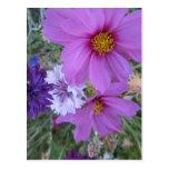 wildflowers púrpuras postal