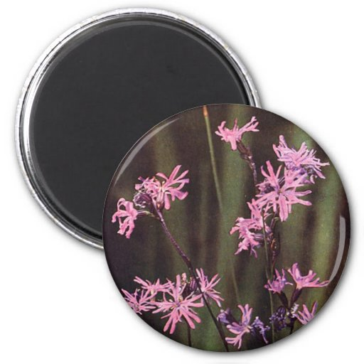 Wildflowers: Ragged Robin 2 Inch Round Magnet