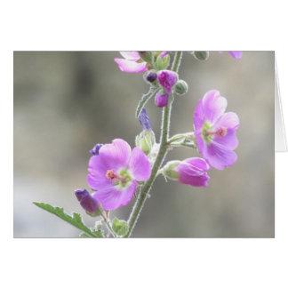 Wildflowers rosados de la malva de globo felicitacion