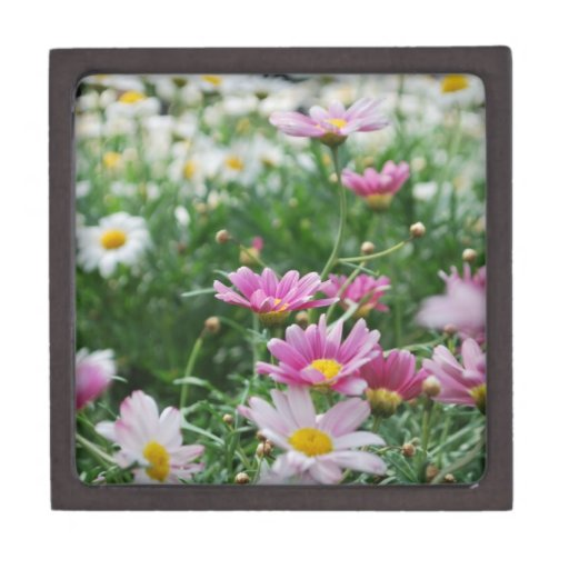 Wildflowers rosados y blancos cajas de joyas de calidad