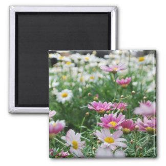 Wildflowers rosados y blancos imán cuadrado