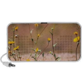 Wildflowers Travel Speaker