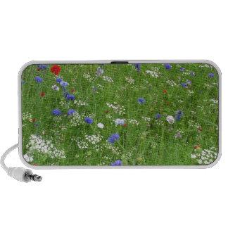 Wildflowers Speakers