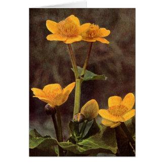 Wildflowers: Tarjeta de la maravilla de pantano