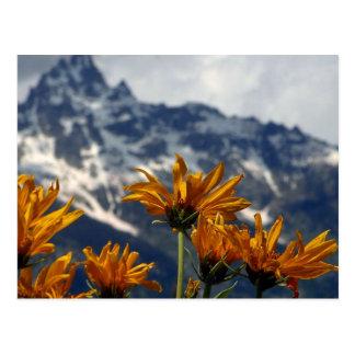 Wildflowers Tetons magnífico Postales
