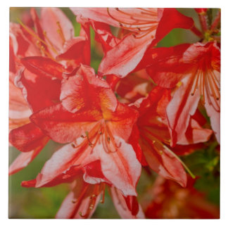 "Wildflowers - ""The Red Wildflower"" Tiles"