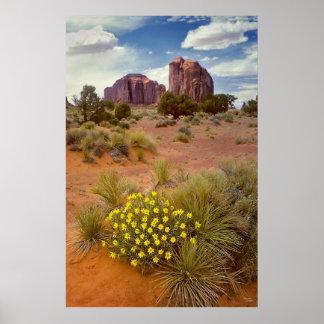 Wildflowers - valle del monumento - Arizona Póster