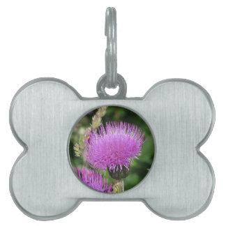 Wildflowers violetas en el prado placa mascota