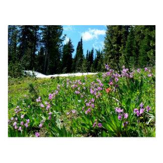 Wildflowers y abetos tarjetas postales