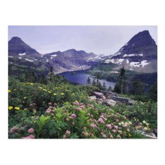 Wildflowers y lago ocultado, arbustivos postales