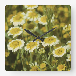 Wildflowers Yellow and White Square Wall Clock