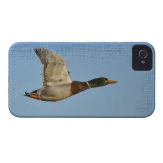 Wildlfe para el regalo del pájaro de Birdlovers iPhone 4 Carcasas