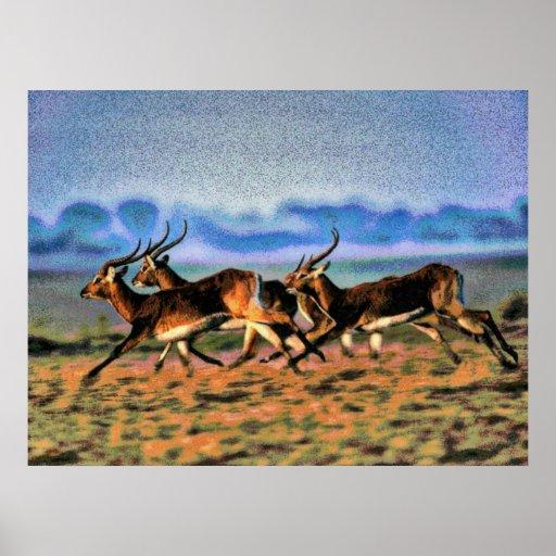 Wildlife 7 blurred poster