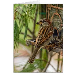 Wildlife Bird Collection - HOUSE SPARROW FEEDING Card