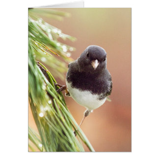 Wildlife Bird Collection - Junco Bird Perched Card