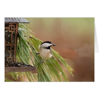 Wildlife Bird Collection - Note Cards - Chickadee