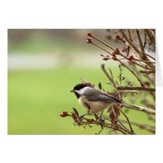 Wildlife Bird Collection -Note Cards-Chickadee II Card