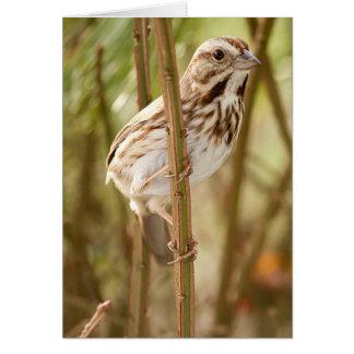 Wildlife Bird Collection -Perched Lark Sparrow Card