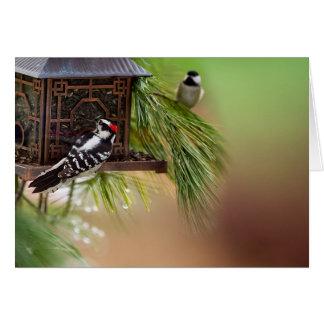Wildlife Bird Collection -Woodpecker/Chickadee Card
