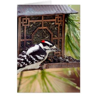 Wildlife Bird Collection -Woodpecker-Note Card