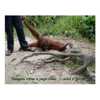 Wildlife Child Temper Tantrum Postcard