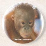 Wildlife Conservation Beverage Coasters