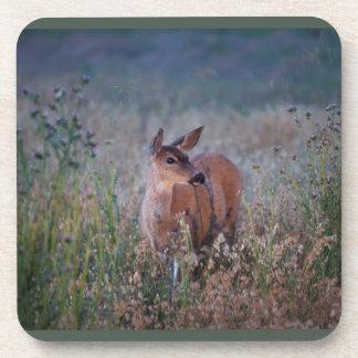 Wildlife Deer Coasters