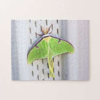 Wildlife - Green Luna Moth Puzzle