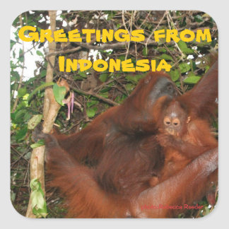 Wildlife Greetings from Indonesia Stickers