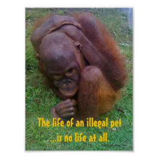 Wildlife Illegal Pet Trade Poster