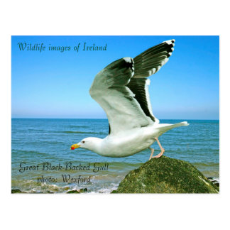 Wildlife images for postcard