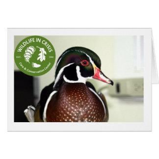 Wildlife in Crisis Greeting Card