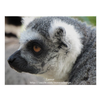 Wildlife - Lemur poster