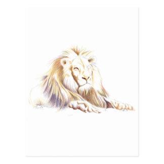 Wildlife: Lion Picture Postcard