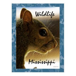 Wildlife Mississippi Gray Squirrel Postcard