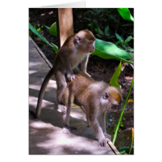 Wildlife Monkey Business  Macaque style Greeting Card