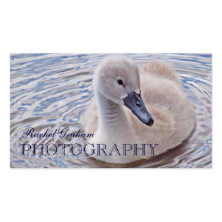 Wildlife (Mute Swan Cygnet) Photography Business Card Template