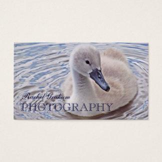Wildlife (Mute Swan Cygnet) Photography Business Card