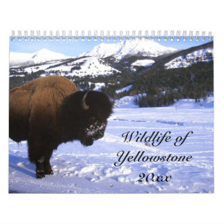 Wildlife of Yellowstone Calendar