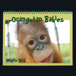 "Wildlife Orangutan Babies Calendar<br><div class=""desc"">Wildlife photography from a famous sanctuary on the island of Borneo. Baby Orangutans calendar features precious orphans from the Care Center featured in the IMAX movie &quot;Born To Be Wild.&quot; This calendar can be customize to start with any year and any month. Click on customize under the product image and...</div>"