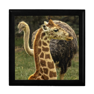 Wildlife Photo of Giraffe and Ostrich Gift Boxes