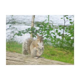 wildlife photo of squirrel canvas print