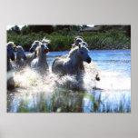 Wildlife Photography Wild Horses Poster 18x24