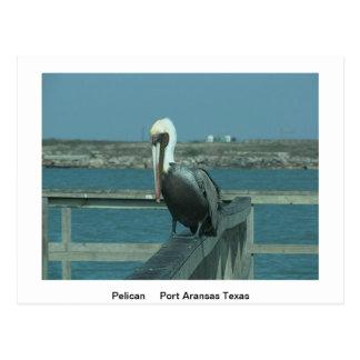 Wildlife Post Card Postcard