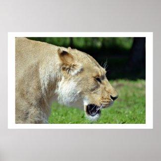 Wildlife Poster 6