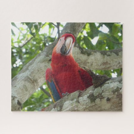Wildlife Puzzle: Colorful Red Parrot Jigsaw Puzzle