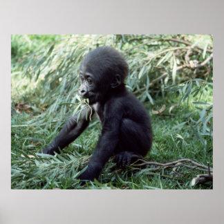 Wildlife Set - Baby Gorilla Close-up Poster Poster