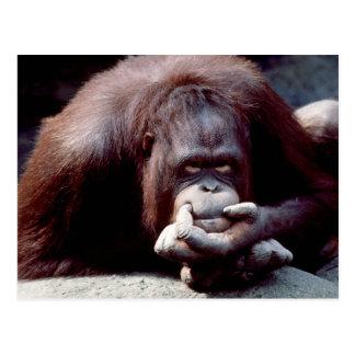 Wildlife Set - Primates 10 Postcard