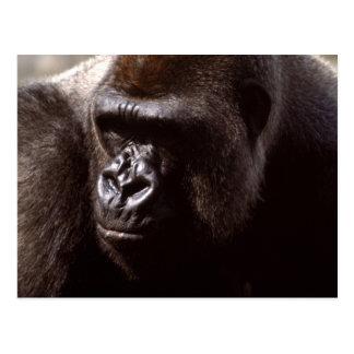 Wildlife Set - Primates 13 Postcard